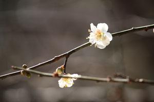 03-03-022うめ2