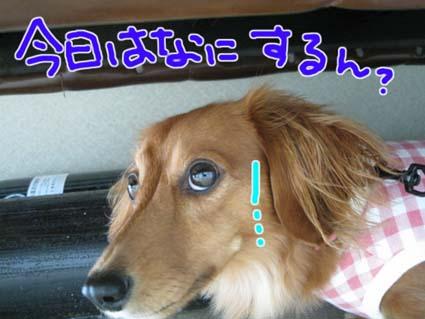 blog 09100506