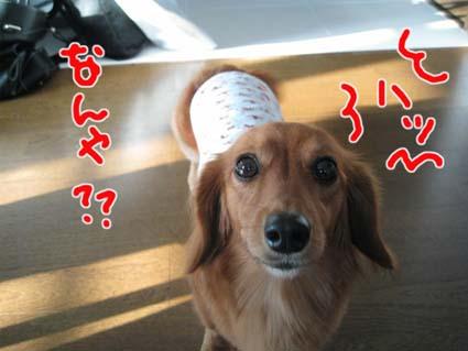 blog 09100505