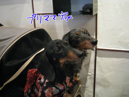 blog 09111902