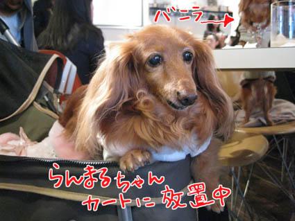 blog 09111901