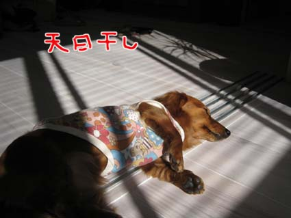 blog 09120709