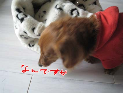 blog 09121105