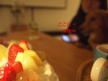vanilla10111902.jpg