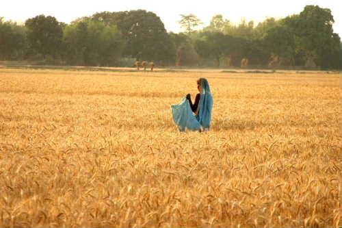 Rajbirajの麦畑