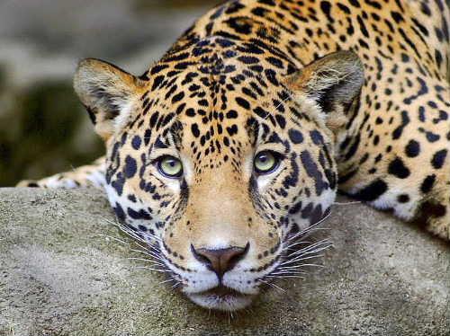Parsa wildlife reserve2