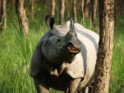 Parsa wildlife reserve5