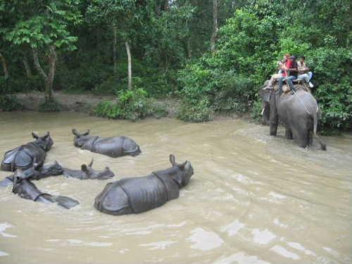 Chitwan national park5
