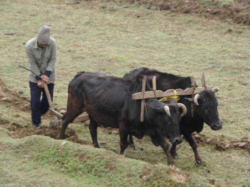 Banke village3