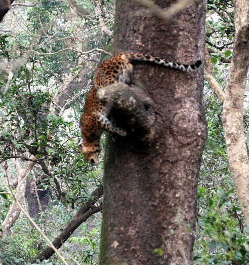 Visit-Leopards-Chitwan-National-Park.jpg