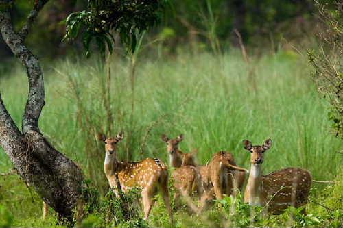 chitwan-national-park-nepal.jpg