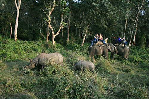 nepal_wildlife_reserve_tour.jpg