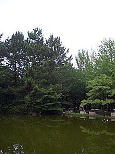 after-rain2009.jpg