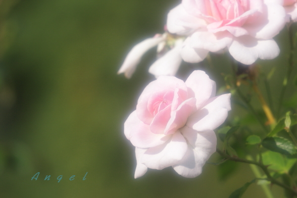 ラブリーメイアンAngel(120)
