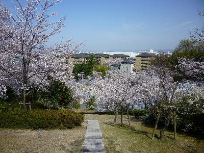 パナヒルズの桜