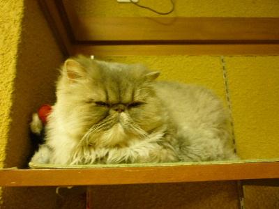 猫のじかん6