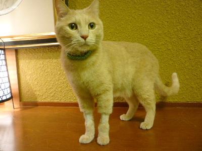 猫のじかん11