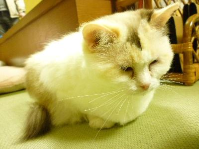 猫のじかん13