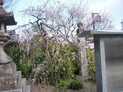 梅宮神社3