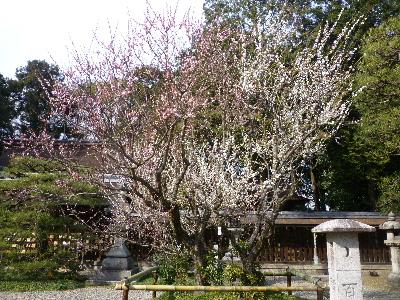 梅宮神社4