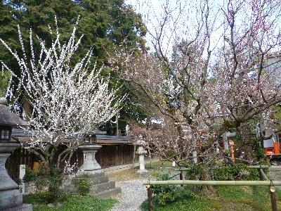 梅宮神社5