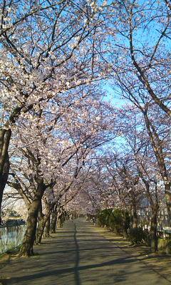 新幹線公園1