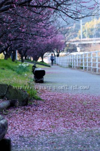 梅の花から始まる春♪