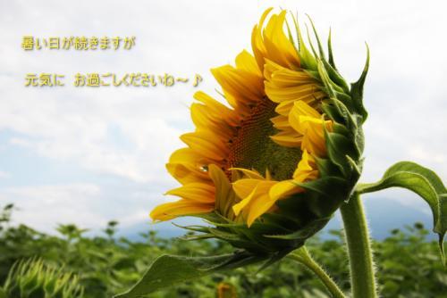 盛夏のごあいさつ