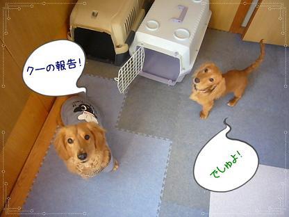 クーちゃんの報告ね☆