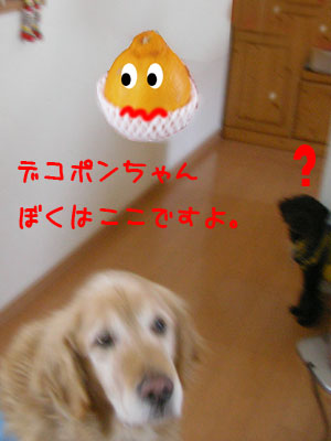 bokuhakoko.jpg