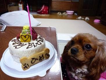ひめとケーキ