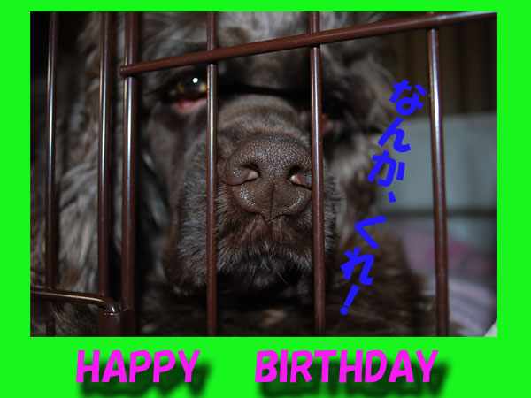 ケリーの誕生日
