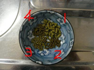 snap_wankosyoukai_200921153817.jpg