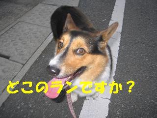 コピー ~ ゆぅのラン_20090920_0026