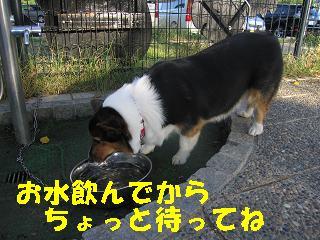 ゆぅのラン_20090920_0024
