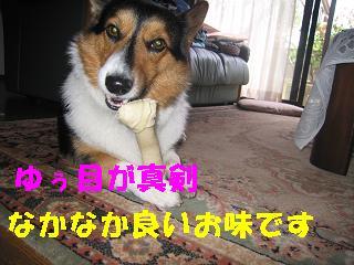 ゆぅのラン_20090925_0007
