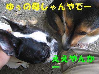 ゆぅのラン_20091004_0009