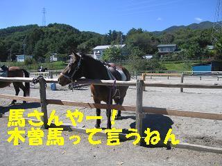 ゆぅのラン_20091011_0016