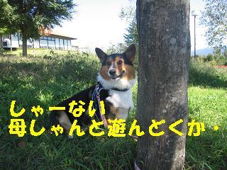 コピー ~ ゆぅのラン_20091011_0012