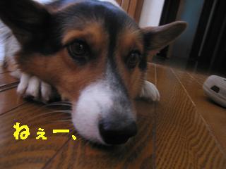 これは_20091016_0016