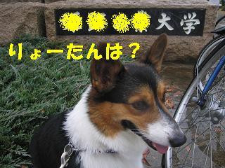 コピー ~ 工大祭 019