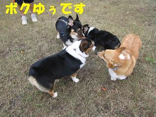 コピー ~ 2009-11-15ゆうラン 011