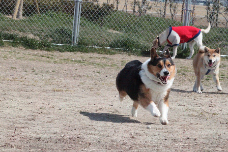 ナンちゃって飛行犬
