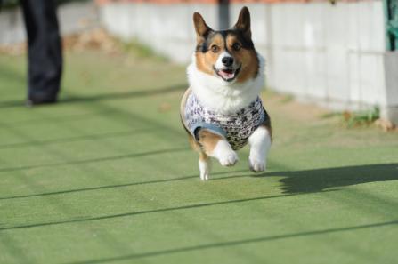 ゆぅ飛行犬