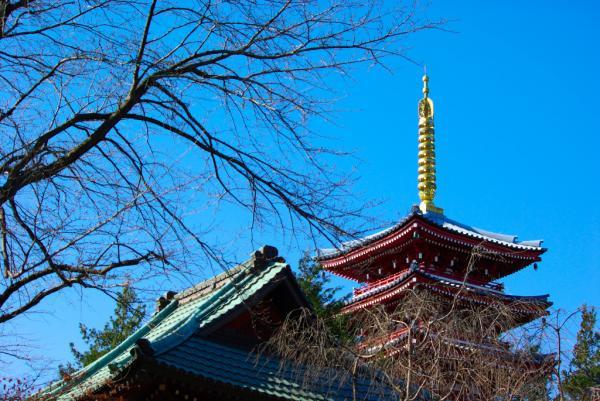 長谷山本土寺、五重塔-鐘楼-楓