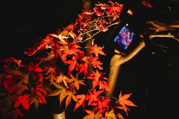 紅葉を。。。