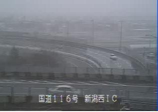 新潟雪解け116