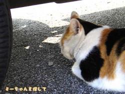 車の下で休むミーちゃん