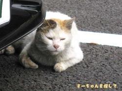 間違え猫1
