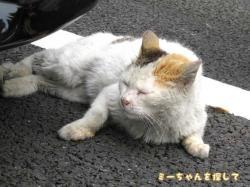 間違え猫2
